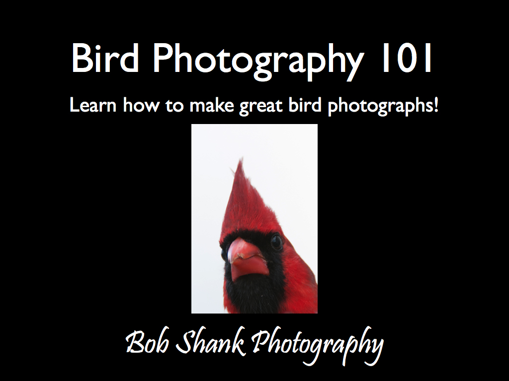 Presentation - Bird Photography 101