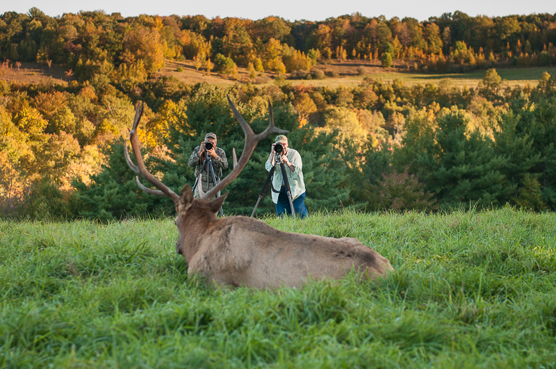 Pennsylvania Elk Photography Experience - Bob Shank Photography